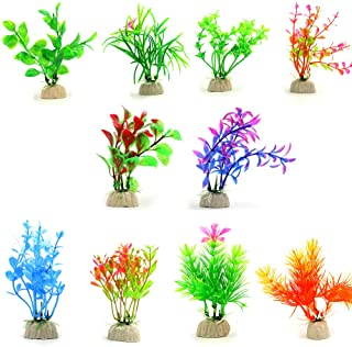 گیاه تزئینی زیستگاه لاک پشت مدل رنگین کمان