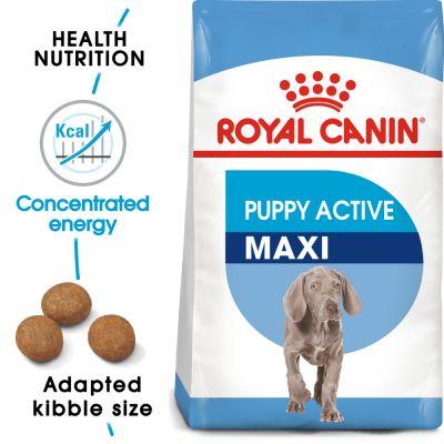 غذای خشک مناسب توله سگ نژاد بزرگ با فعالیت بالا برند رویال کنین