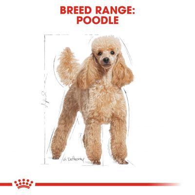 غذای خشک سگ بالغ نژاد پودل برند رویال کنین