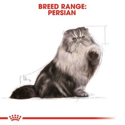 پوچ مناسب گربه بالغ پرشین برند رویال کنین