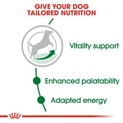 غذای خشک سگ +Mini Adult 8 برند رویال کنین