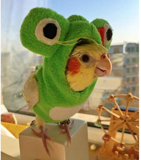 لباس کارتونی مدل قورباغه مناسب پرندگان