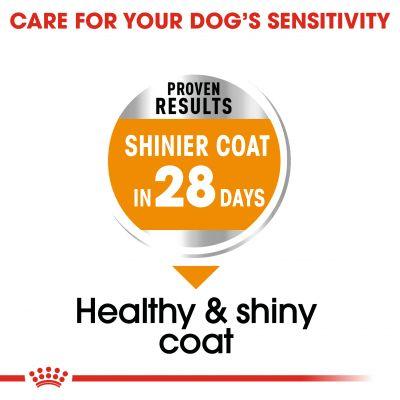 غذای خشک مناسب مراقبت از موی سگ برند رویال کنین