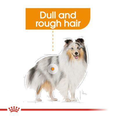 غذای پوچ مناسب مراقبت از موی سگ برند رویال کنین