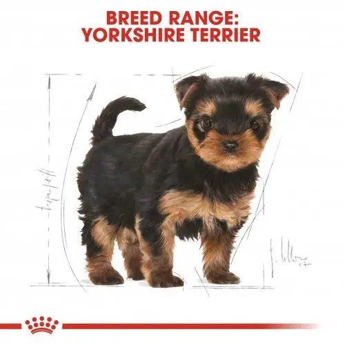 خرید غذای سگ پاپی یورکشایر رویال کنین وزن 1.5 کیلوگرم