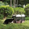 پارک سگ برزنتی
