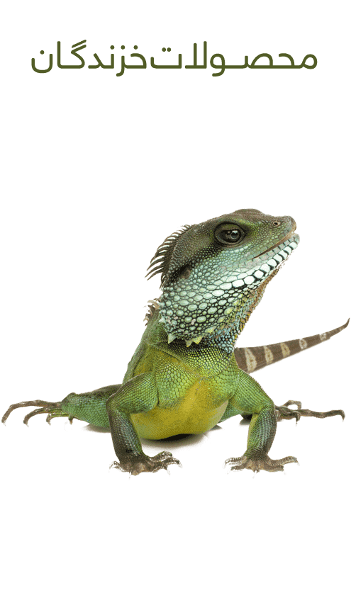 Reptiles Accessories 1