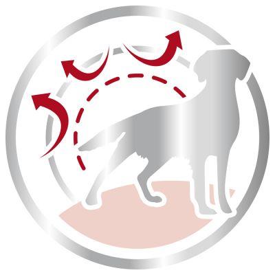 غذای خشک سگ بالغ نژاد متوسط برند رویال کنین