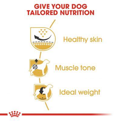 غذای خشک سگ بالغ نژاد پاگ برند رویال کنین